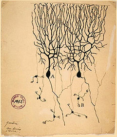 Antique Drawing of Neuron showing numerous dendrites